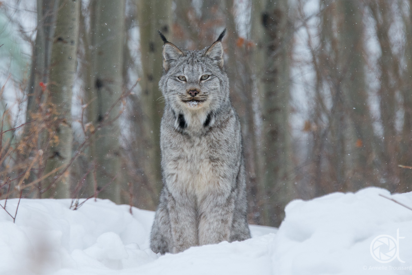 Lynx, Northwest Territories, Canada