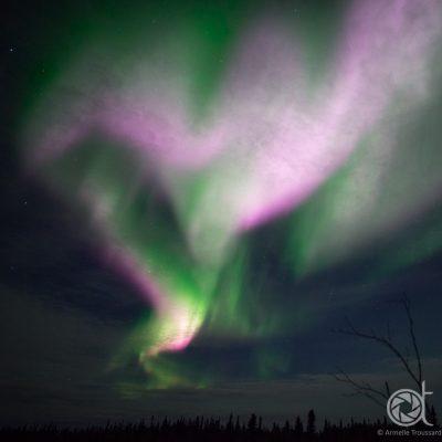 Aurora Heart